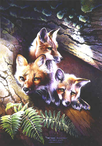 wildlife paintings, wildlife artwork, wildlife artist, wildlife paintings, paintings of wildlife,  smoky mountain wildlife paintings,Animal Paintings, Wildlife Paintings, animal & wildlife artwork, paintings of animals~Wildlife Artist~Smoky Mountains. Paintings of animals from around the world done by Christian artist Spencer Williams