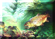 Underwater Paintings, animal & wildlife paintings, animal & wildlife artwork, paintings of animals~wildlife Artist~Smoky Mountains. Paintings of animals from around the world done by Christian artist Spencer Williams