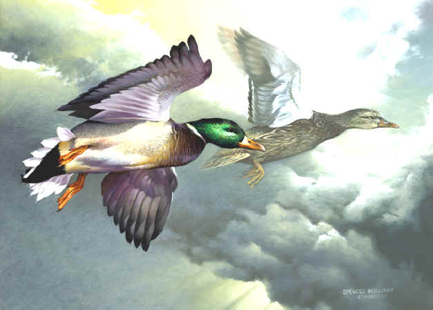 Bird Paintings, animal &  wildlife paintings, animal & wildlife artwork, paintings of animals~wildlife Artist~Smoky Mountains. Paintings of animals from around the world done by Christian artist Spencer Williams