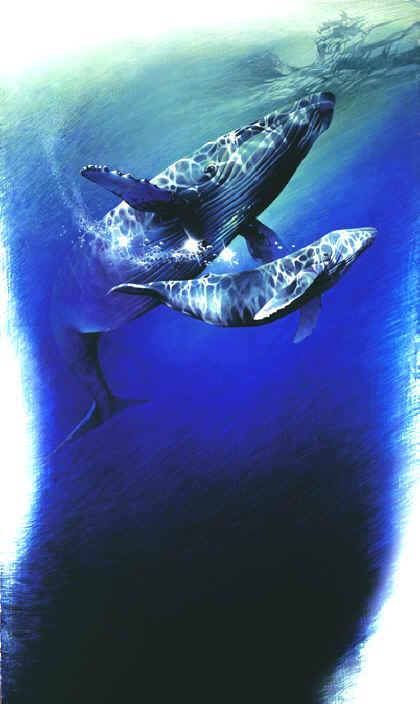 underwater paintings animal amp wildlife paintings